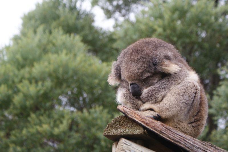 Tidur cemberut