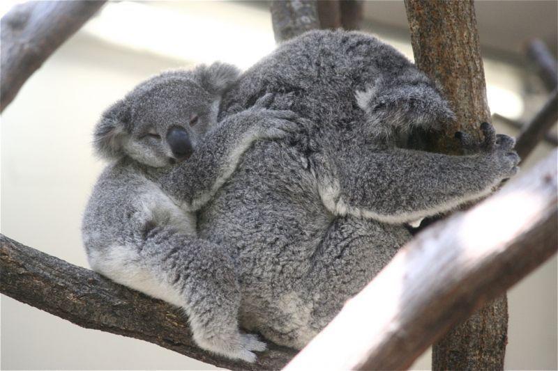 Keluarga tidur bersama