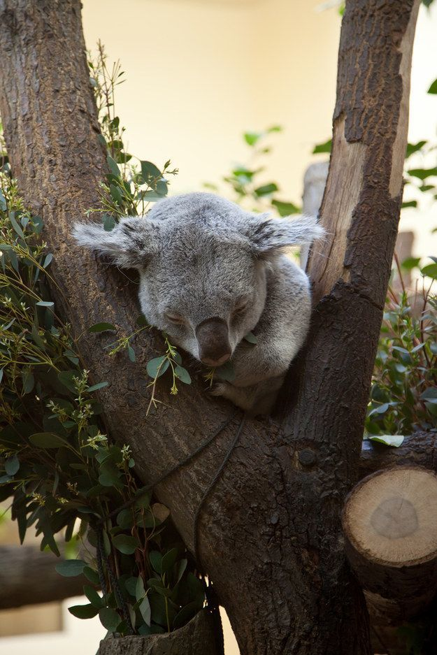 Tidur disela pohon