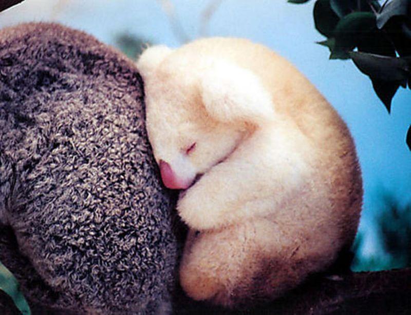 Nggak kuat nahan ngantuk