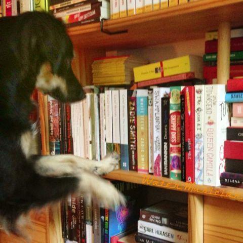 Anjing + Buku = Sempurna <3