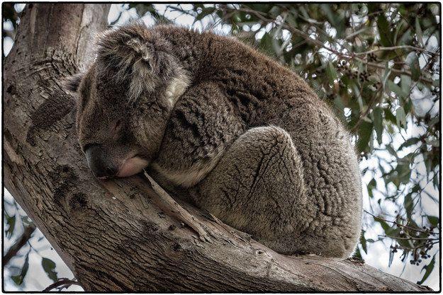 Tidur meringkuk