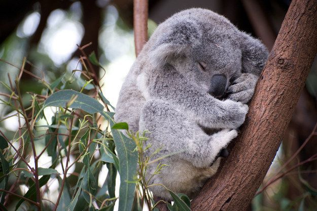 Walau tidur tetap pose