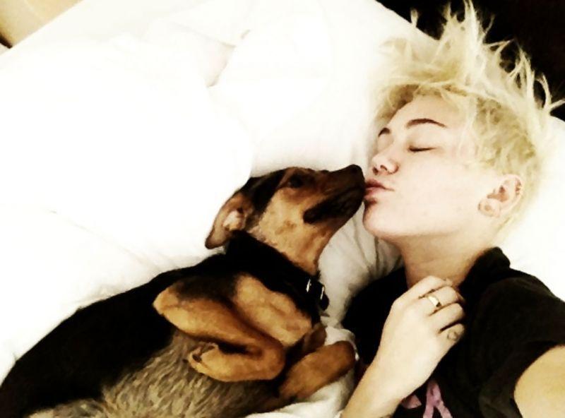 Miley dan anjing