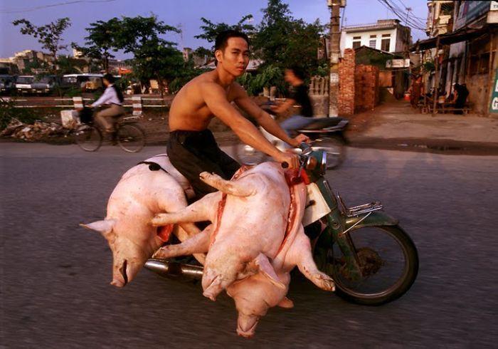 calon babi kecap
