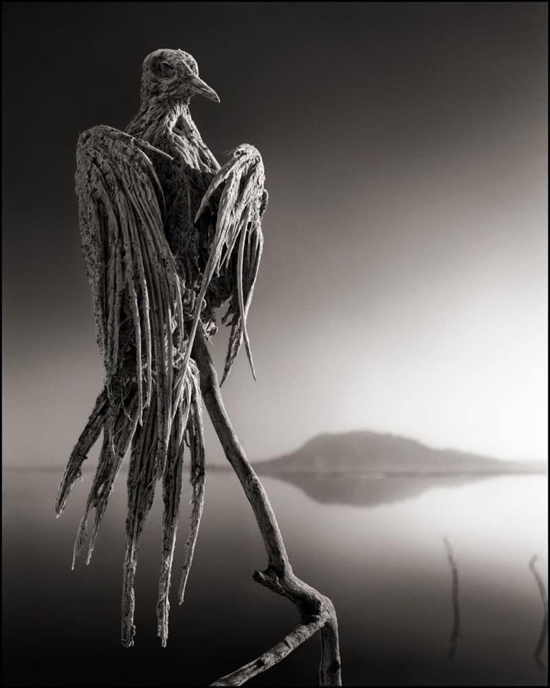 Contoh korban Danau Natron