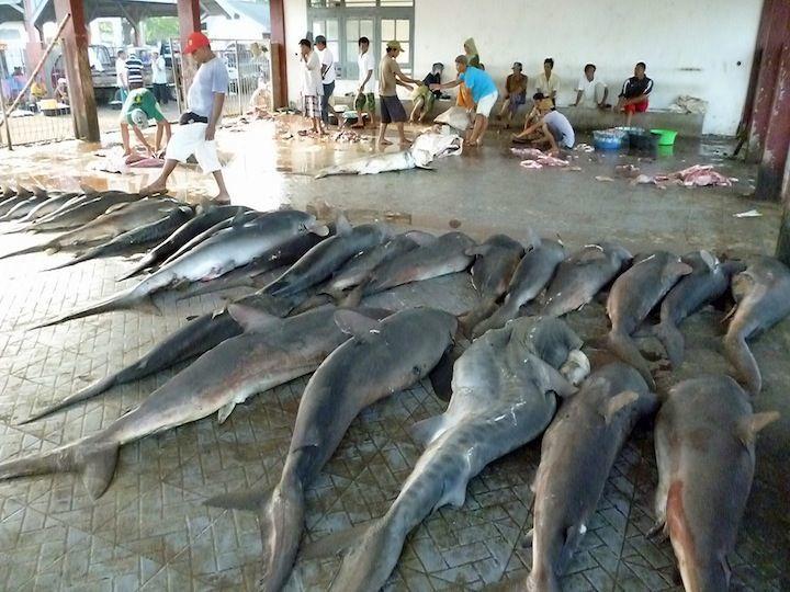 Salah satu program penyelamatan lumba-lumba JAAN