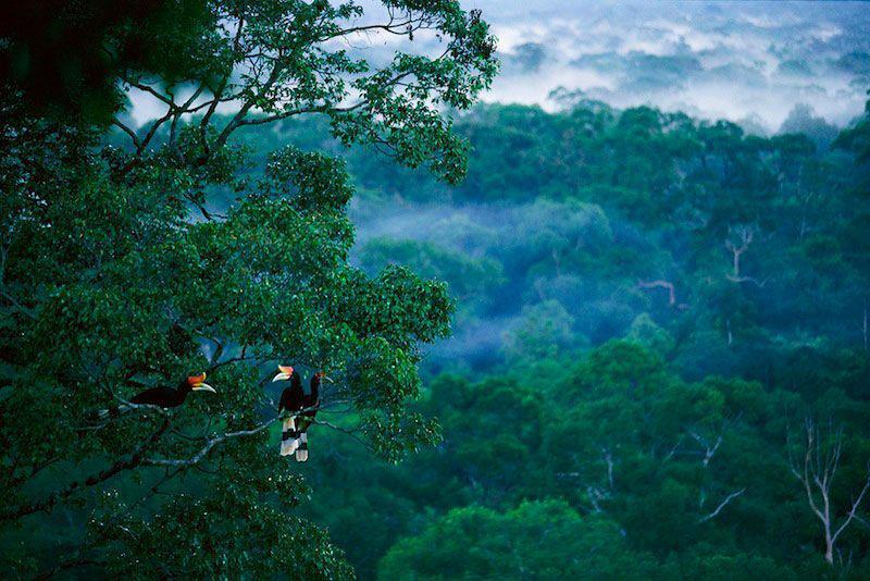 Tidak akan selamanya cantik: Indonesia kehilangan lebih dari 6 juta hektar hutan dari 2000-2012.