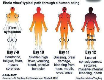 Proses virus ebola menjalar dalam tubuh manusia
