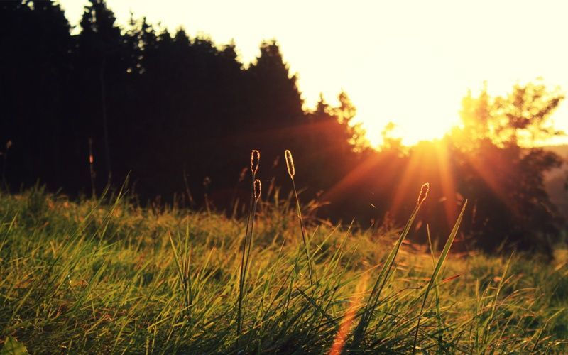 sinar matahari membantu melawan kanker