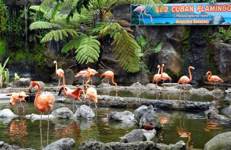 kebun binatang yang bersih di Indonesia.