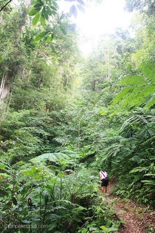 Hutan menuju Waerebo