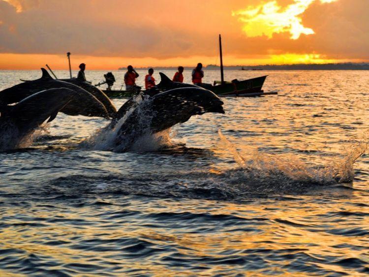 Lumba-lumba di Pantai Lovina