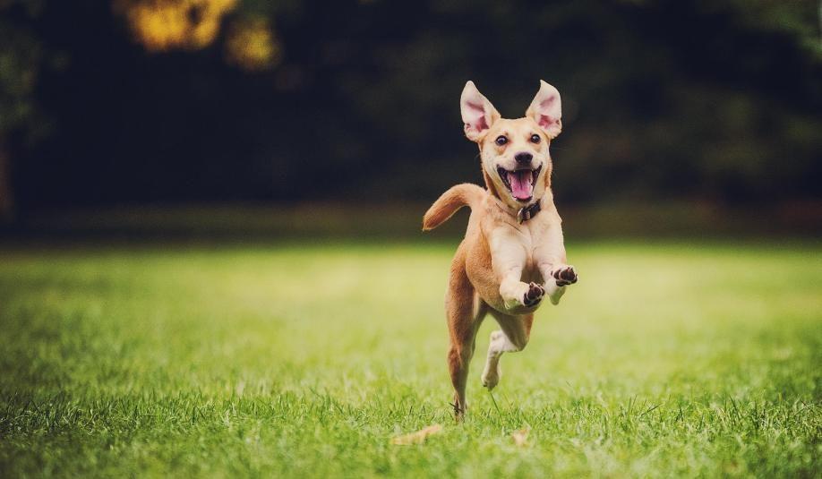 Anjing bukan makanan: mengapa kita harus berhenti menyantap daging