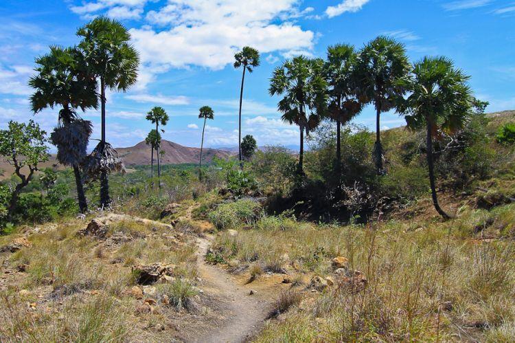 Jalan setapak di Pulau Rinca