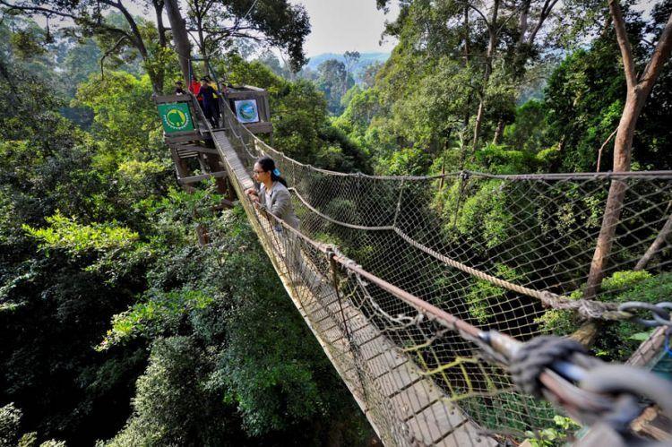 Jembatan Tajuk di Bukit Bangkirai.