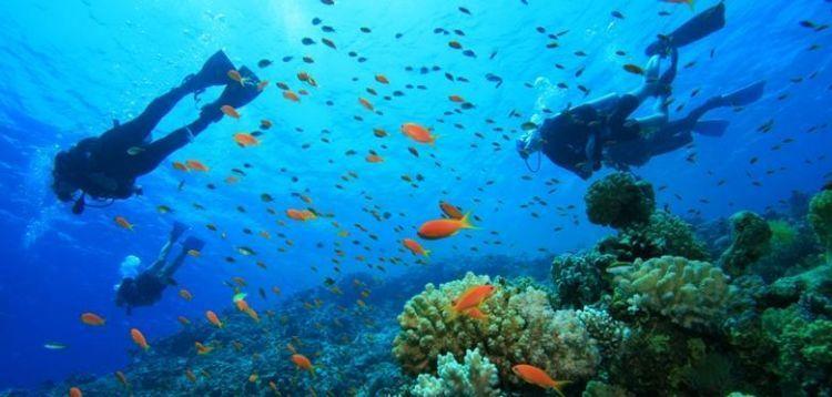 Berdecak kagum oleh pemandangan alam bawah lautnya