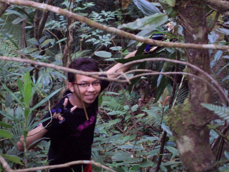Penelitian di hutan