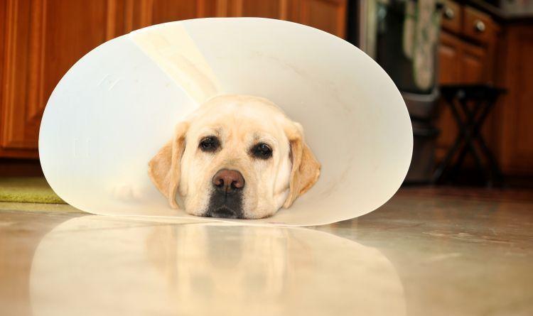 kenali gejala anjing yang sedang sakit