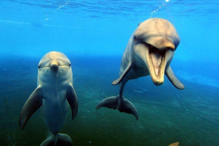 Lumba-lumba yang bahagia yang di habitat sebenarnya