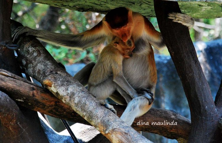 Satwa di Taman Safari Prigen, Jawa Timur