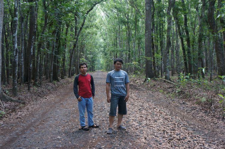 Rimbunnya pepohonan dan jalan lebar dengan serakan daun kering.