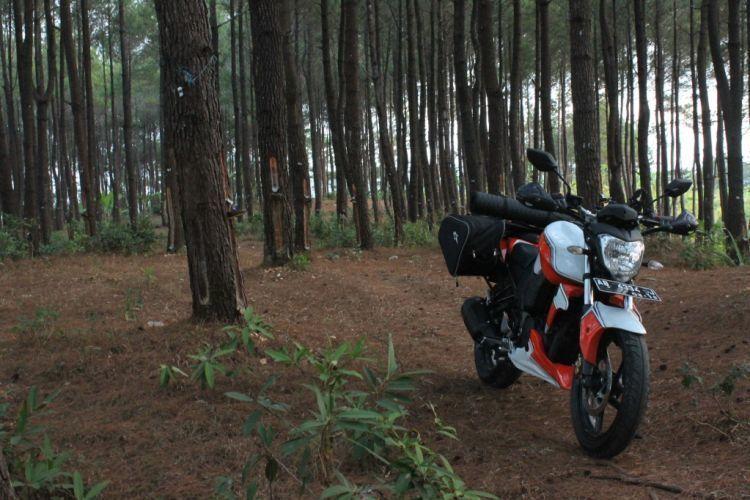 Motor touring kesayanganmu bisa dijadikan obyek foto traveling di Hutan Pinus Imogiri.