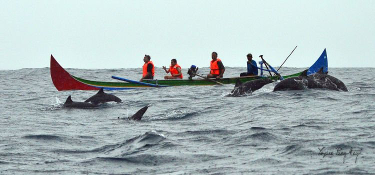 berburu lumba-lumba