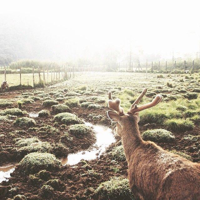 Bercengkerama dengan rusa di Ranca Upas