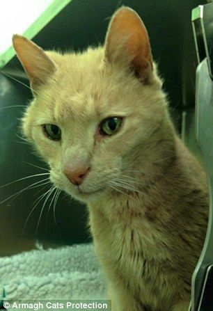 29B9FEEE00000578-3129297-When_vets_checked_his_microchip_they_were_stunned_to_find_he_was-a-3_1434711423696
