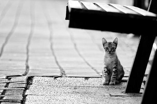 Tega nggak sih ngebiarin kucing lucu ini di jalan? :(
