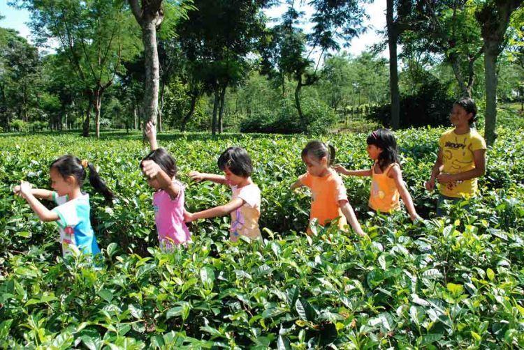 Agrowisata kebun teh Semugih