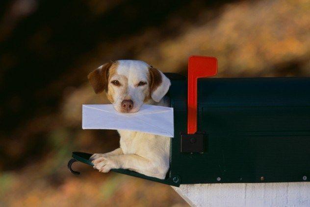 Menjaga kotak pos