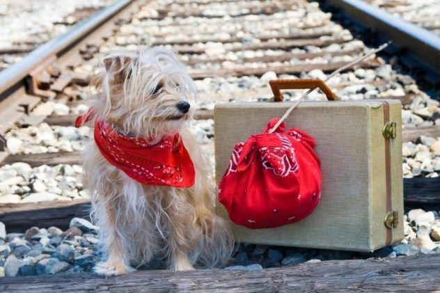 Anjing traveling