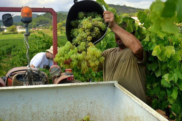 Produksi wine di Spanyol