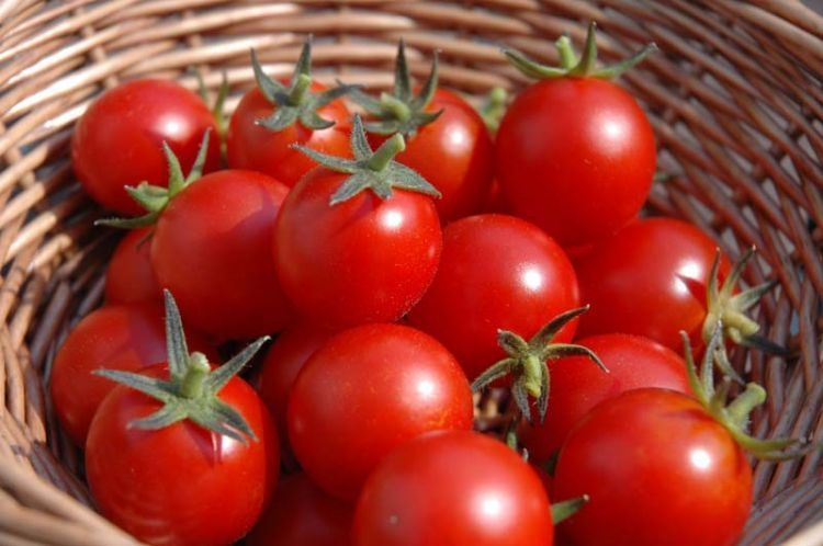 homegrown-tomatoes