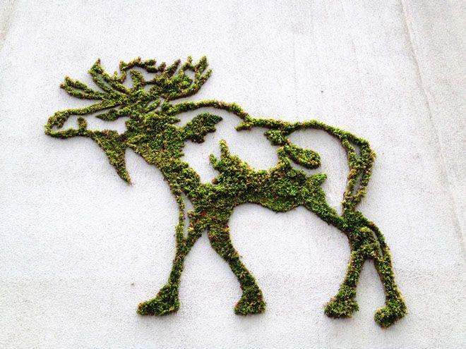 Desain grafiti lumut atau moss grafity