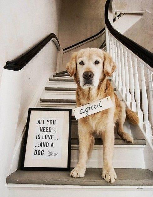 Yang kamu butuhkan adalah cinta dan anjing