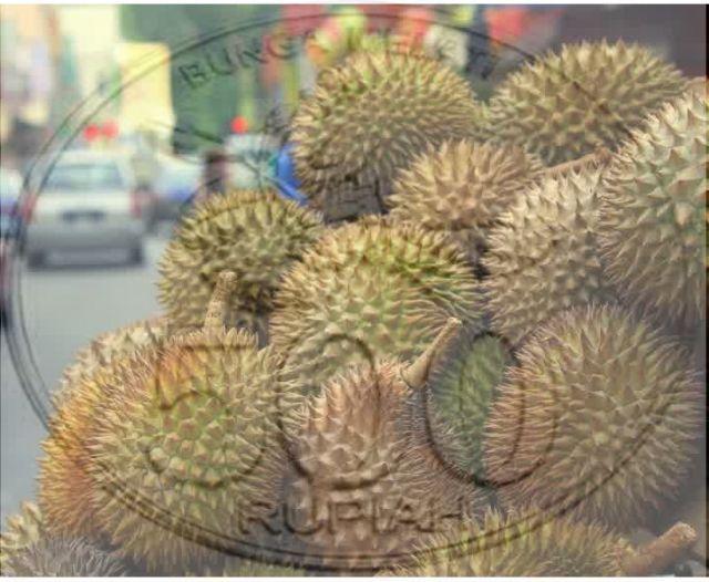 Durian Nias