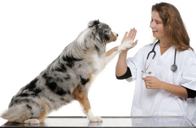 Bersahabat dengan anjing bukan sesuatu yang mustahil.