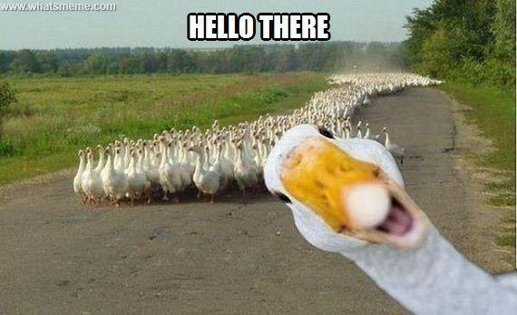 Halooo? Haloooo?