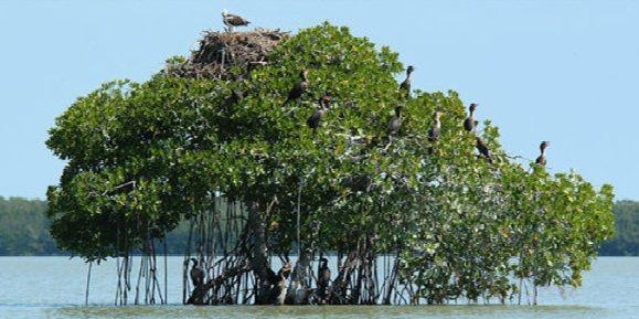 Hutan Mangrove di tanjung jabung