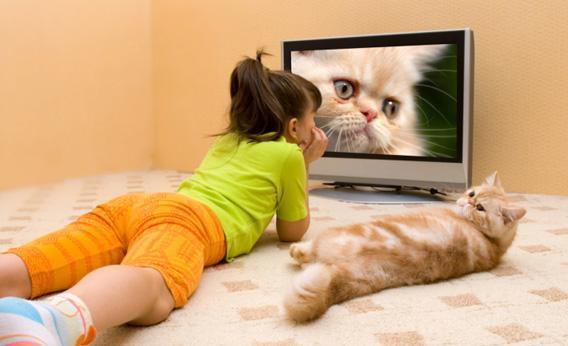 Nonton bareng kucing