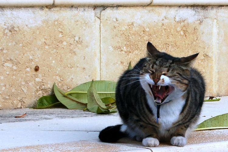 Tanpa perlu marah-marah, sikap elegan akan menunjukkan kepribadianmu.