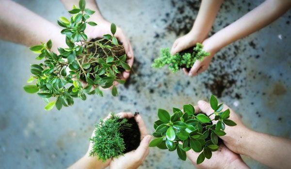 Pohon, ciptaan Tuhan yang serbaguna!