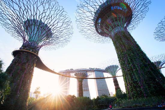 Pohon yang luar biasa tingginya (Kredit: Singapore Tourism Board)