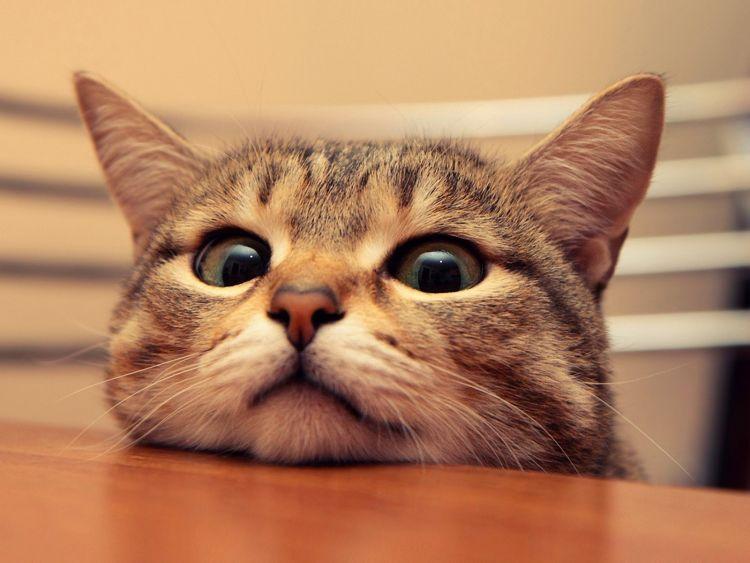 Kucing yang Menggemaskan