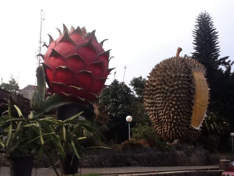 berburu buah-buahan di Warso Farm