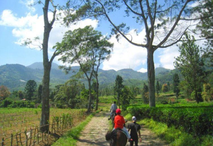 menjelajahi agrowisata Gunung Mas