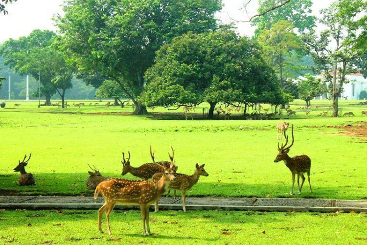 santai di Kebun Raya Bogor